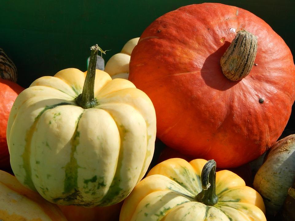 pumpkins-459500_960_720