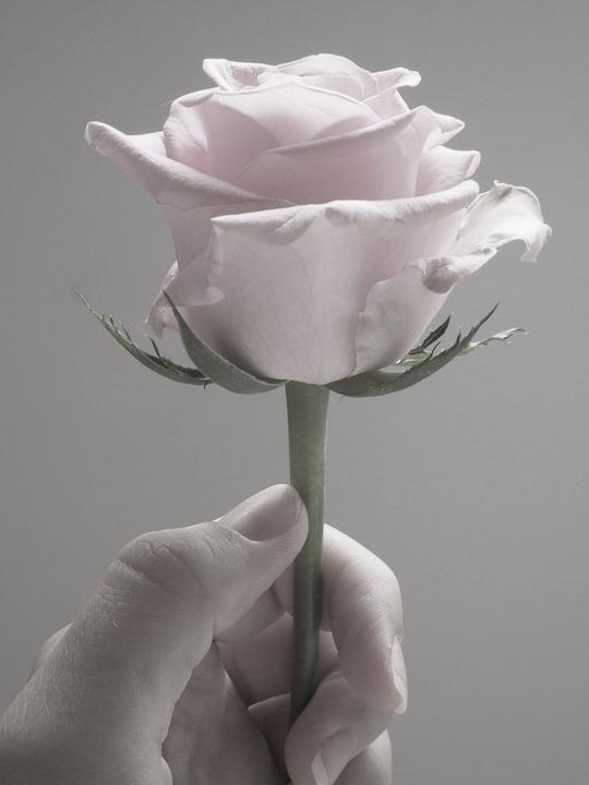 flower-3063958_960_720