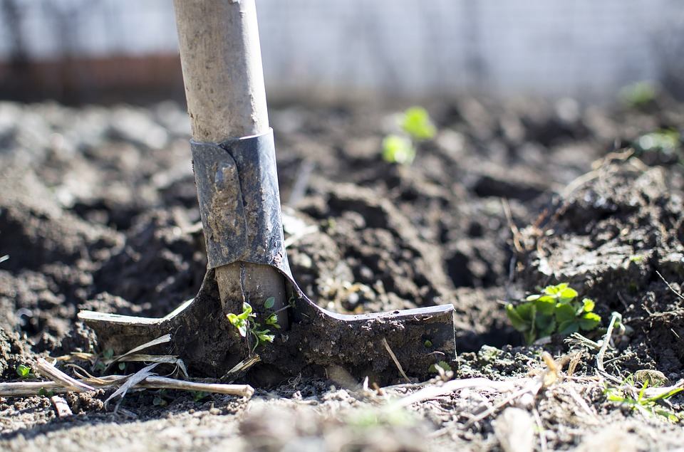 My 100-Day Plan, Day 92: We Could All Use a Farming Lesson (about sowing and reaping)